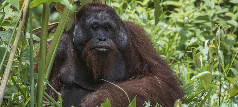 Sabah,Borneo
